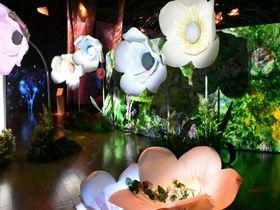 日本橋で一足早いお花見?「フラワーズバイネイキッド」が美しすぎる