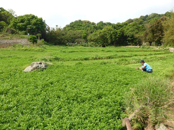 飲茶のあとは川龍村をちょっとお散歩してみませんか