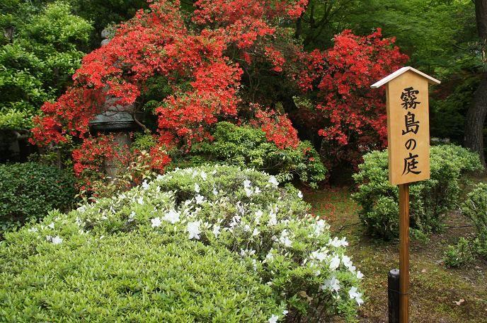霧島ツツジで真っ赤に!霧島の庭