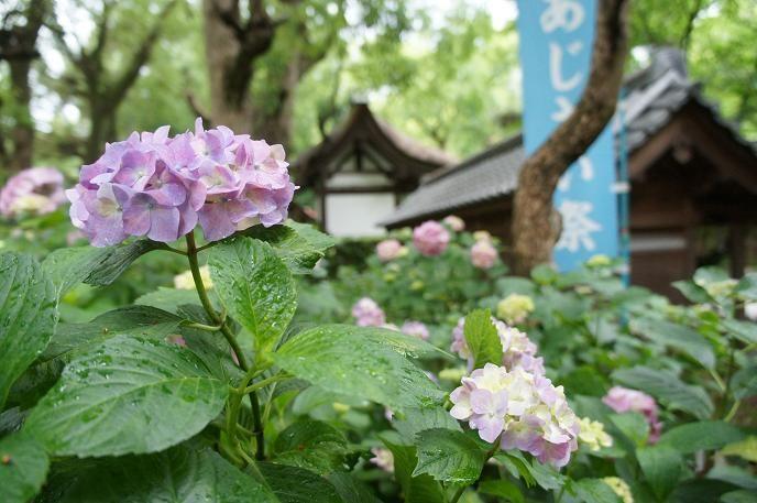 伏見稲荷大社からJR3分+徒歩5分:藤森神社
