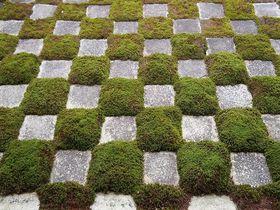 ゆっくり満喫するなら冬がおすすめ!冬でも美しい「京都の庭園4選」|京都府|トラベルjp<たびねす>