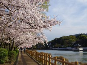 ここならゆっくり桜を観賞できる!京都の穴場な桜名所3選|京都府|トラベルjp<たびねす>