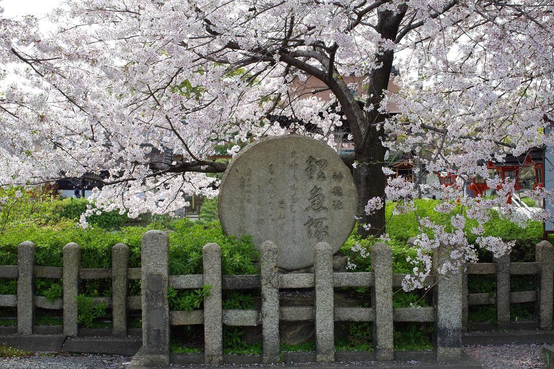 京都駅から徒歩圏内!六孫王神社は桜の名所