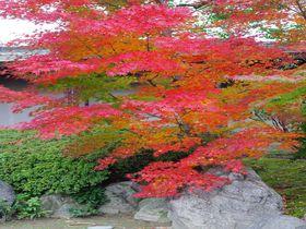 圧巻の枝垂れ梅で有名な京都「城南宮」は紅葉も見応え抜群!