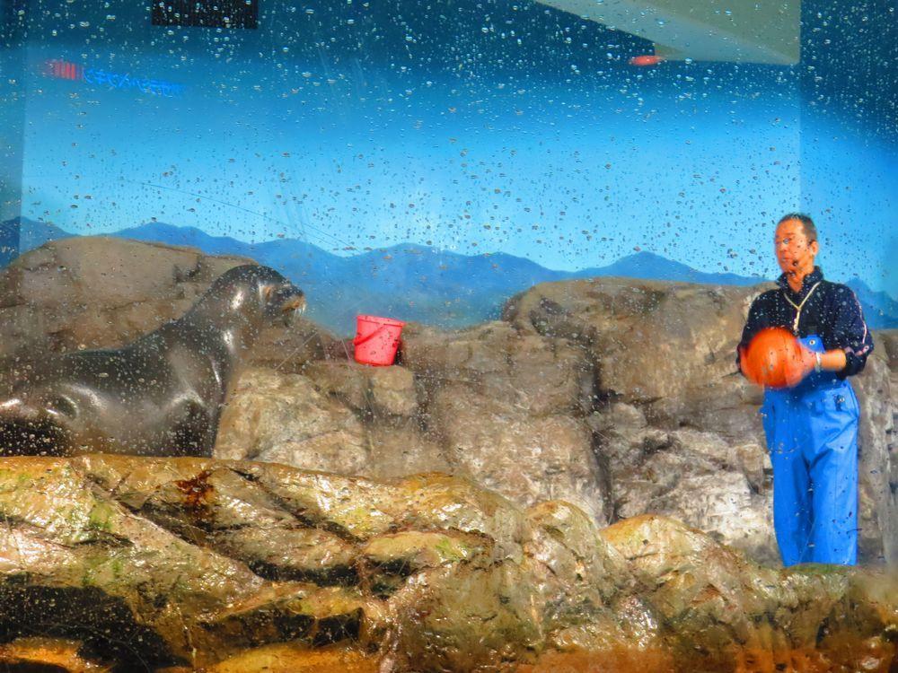 海獣館に行こう