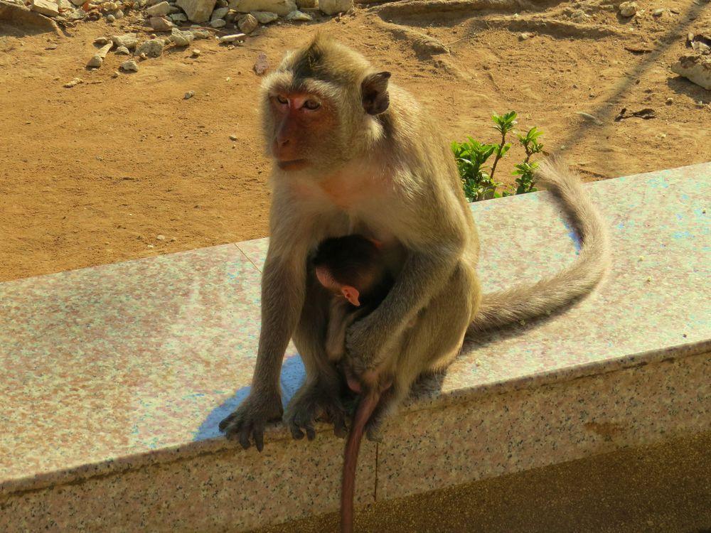 周辺の猿たち