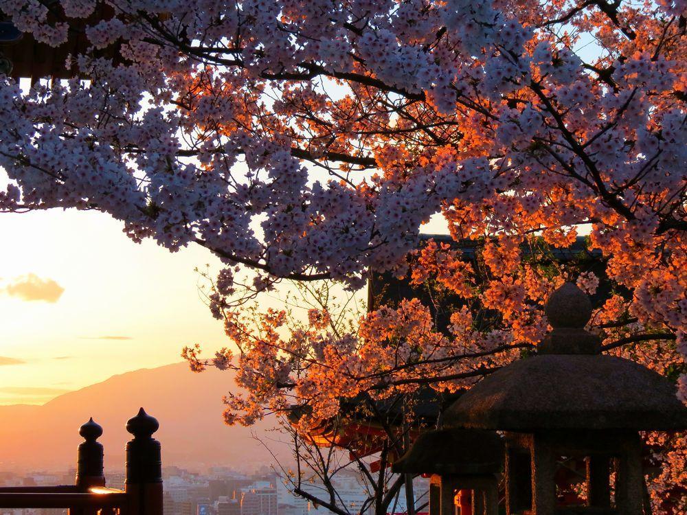 京都市内を展望