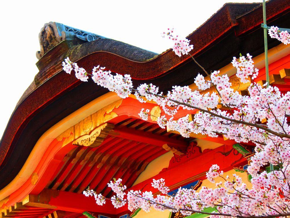 名所「清水寺」で春を満喫!桜とお寺は日本の美