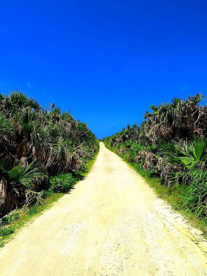 見事なカベール岬への道