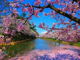 青森の桜はGW頃こそ見ごろ!壕まで桃色になる「弘前城」で岩木山も眺めよう|青森県|トラベルjp<たびねす>