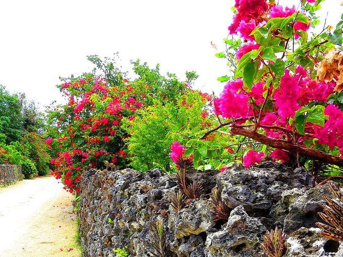 【楽しみ方5】早起きして清々しい気分で沖縄の原風景を楽しむ