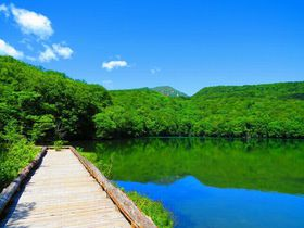 大自然の宝庫・青森「蔦沼」で、濃厚な青と緑を体験しよう!|青森県|トラベルjp<たびねす>