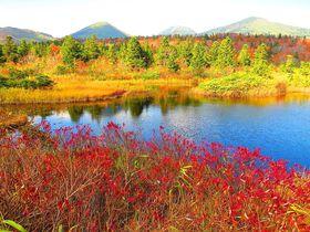 美しすぎる秋の八甲田!訪ねておきたい睡蓮沼と地獄沼|青森県|トラベルjp<たびねす>