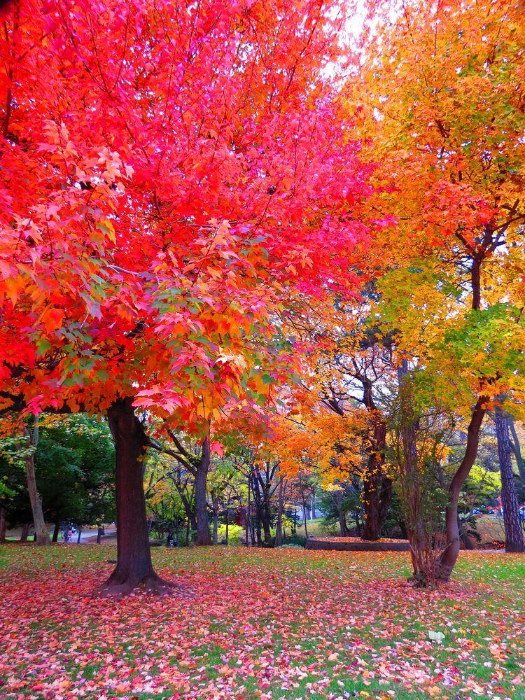 北海道大学とは