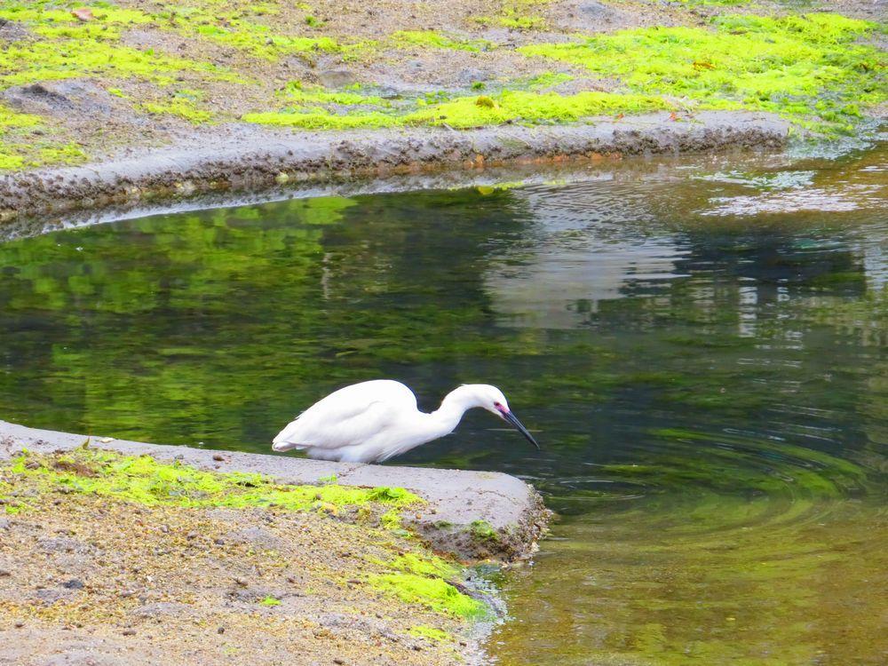 干潮時のみ現れる「鏡の池」