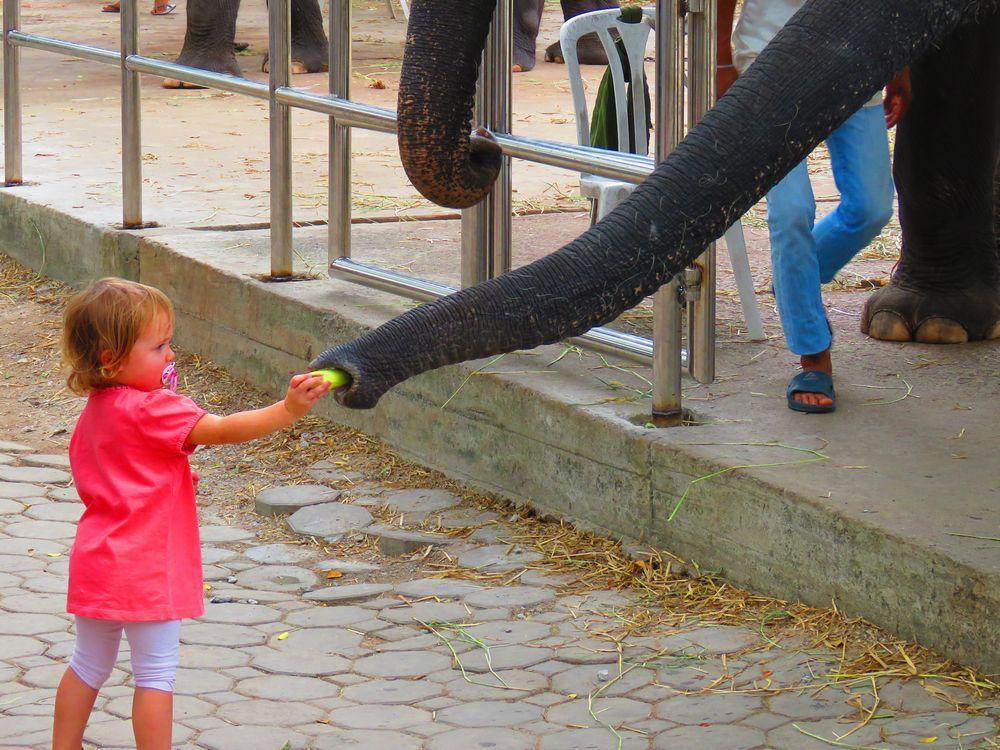 象のハグ?
