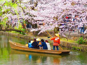 倉敷・美観地区で桜の船旅と、歴史ある観龍寺の美しさ|岡山県|トラベルjp<たびねす>