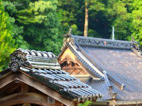 空海建立伝説の岡山高梁「祇園寺」で天狗大杉を見上げよう