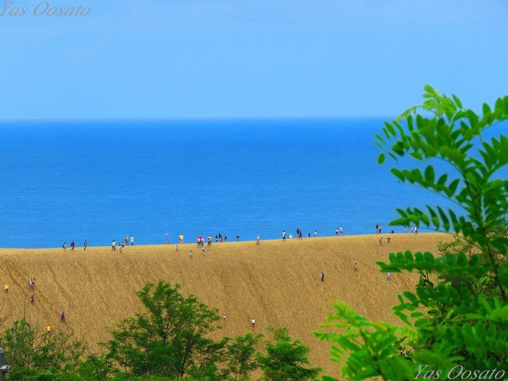 ラクダも歩く鳥取砂丘の美しき景観!砂の美術館も外せない
