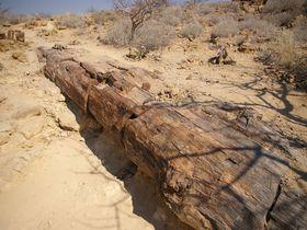ナミビアで必見!「化石の森」悠久の時を超えて化石になった木と2千年生きる植物