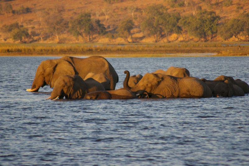 ボツワナ「チョベ川ボートクルーズ」水辺でしか見られない動物を見るならここ!!