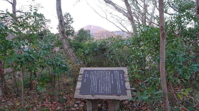 宿のコンセプトは伊豆高原に別荘を持つ