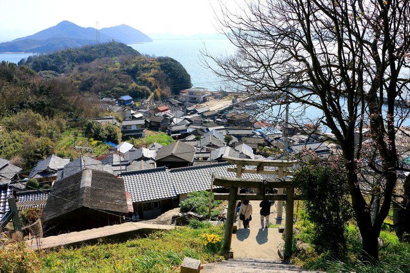 猫と芸術と石垣 瀬戸内海の猫島に癒される 香川県「男木島」