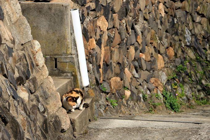 歴史ある灯台が目印!猫・芸術・石垣が魅力の「男木島」