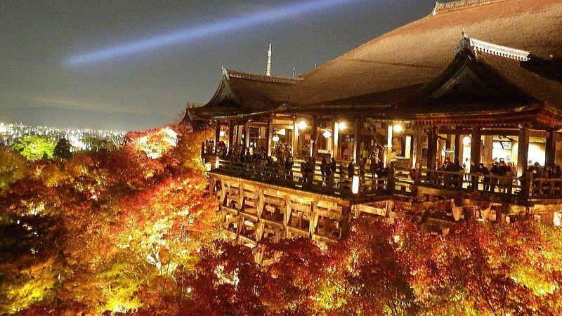 京都・燃ゆる紅葉のトンネル「二尊院」と幻想的な「清水寺」のライトアップに魅了