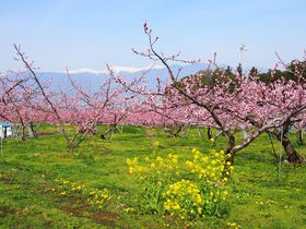 山梨県「笛吹市桃源郷春まつり」春の陽気に誘われて日本一の桃源郷を愛でる|山梨県|トラベルjp<たびねす>