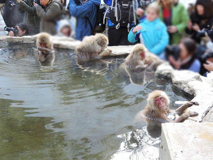 長野県地獄谷野猿公苑のSNOW MONKEYに会いに行こう!