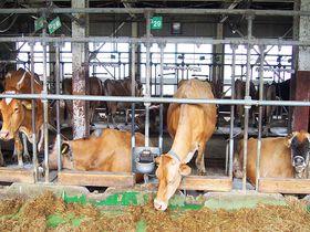 体験イベントも満載!宮崎県「高千穂牧場」で自然と動物に触れ合おう|宮崎県|トラベルjp<たびねす>