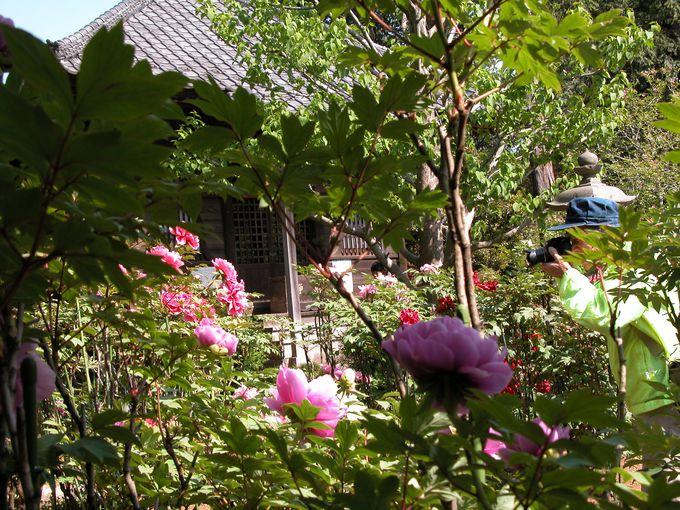 境内は多種類のお花の饗宴!逆井の観音寺