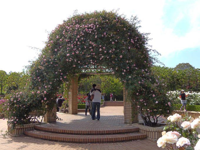 バラのアーチのトンネルはここ!