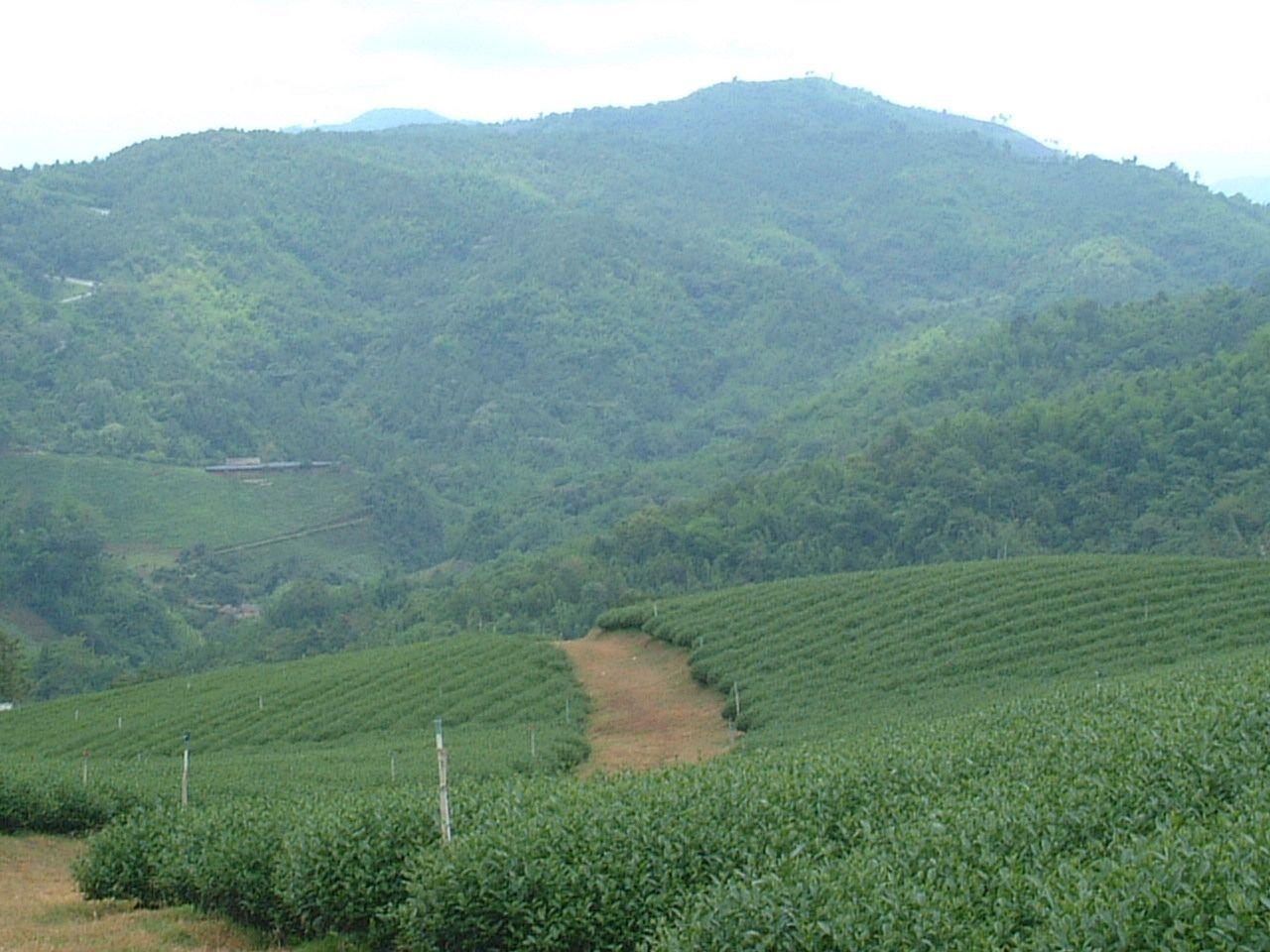 最高級のプーアール茶やウーロン茶が楽しめるドイ・メーサロン