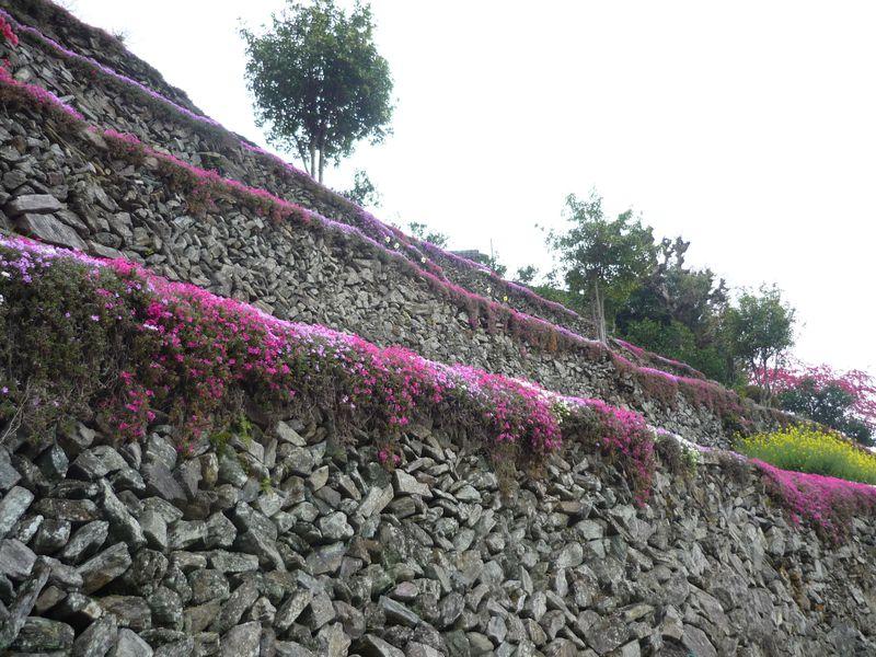 徳島のマチュピチュ?!にほんの里100選に選ばれた高開の石積み