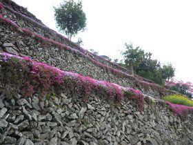 徳島のマチュピチュ?!にほんの里100選に選ばれた高開の石積み|徳島県|トラベルjp<たびねす>