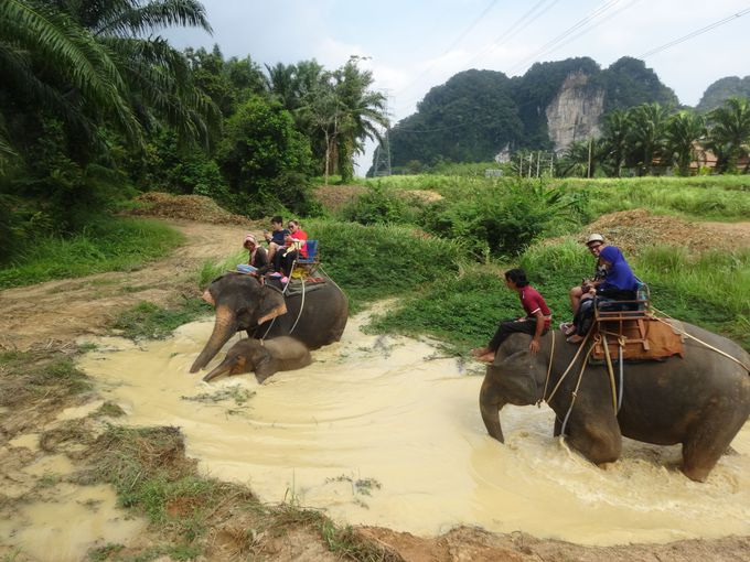象のりを100%楽しめるエキサイティングなコース