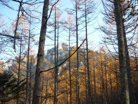 森が金色に輝く季節、山梨県 瑞牆山の頂から紅葉とパノラマの絶景を!|山梨県|トラベルjp<たびねす>
