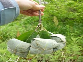 初夏限定!木曽の名物菓子「ほう葉巻き」|長野県|トラベルjp<たびねす>
