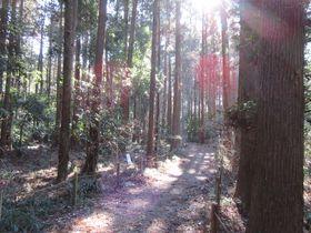 野鳥の声あふれる自然たっぷりの場所!茨城「牛久自然観察の森」|茨城県|トラベルjp<たびねす>