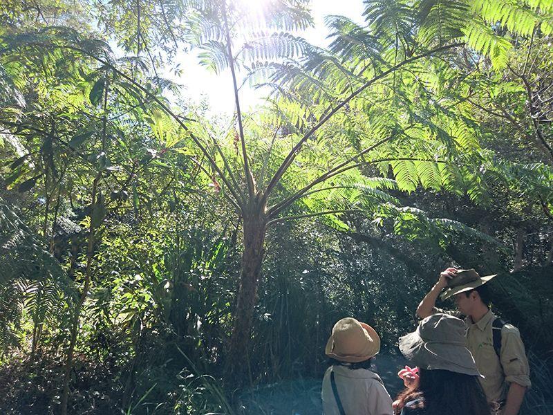 野生のコアラに会えるかも?豪・世界遺産「スプリングブルック国立公園」現地ガイドと行く感動のトレッキング
