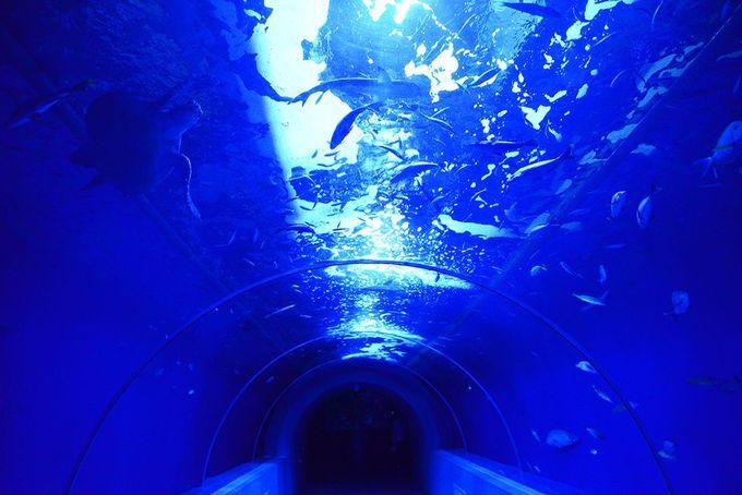 復活したトンネル水槽