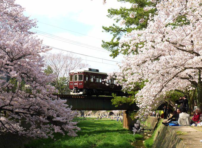 阪急苦楽園口駅周辺。そこはピンク色に染まったお花見の聖地です。
