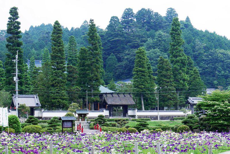6月が見頃!ハナショウブの隠れた名所 兵庫県三田「永澤寺」