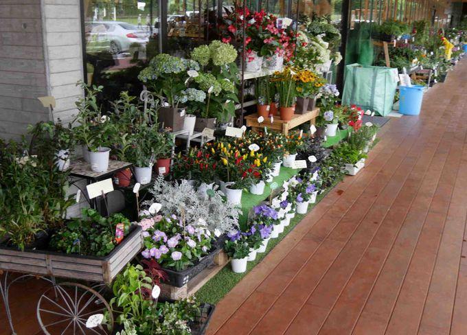 地元産の季節の草木や、加工食品も販売しているので、帰りにここに立ち寄るだけで完結!