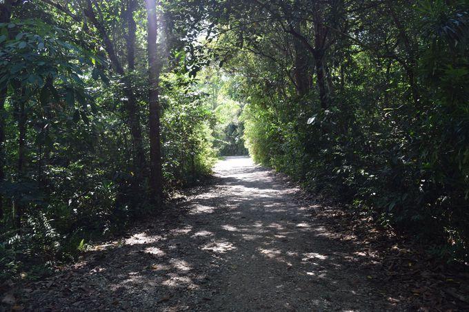 自転車でウビン島を巡ろう!野生動物との遭遇も
