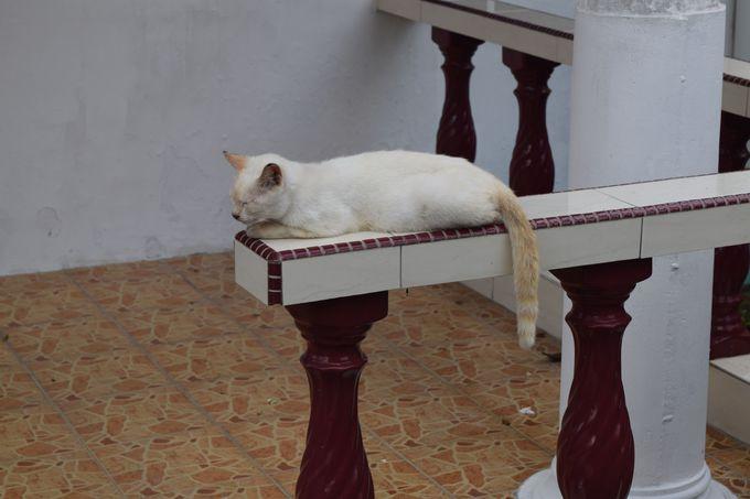 ネコの街クチン!街中にはネコがいっぱい!