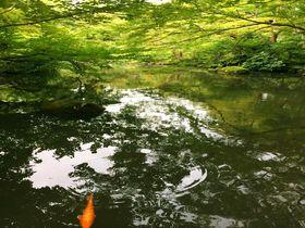 ここが東京!?美しすぎる日本庭園とカフェ「根津美術館」|東京都|トラベルjp<たびねす>