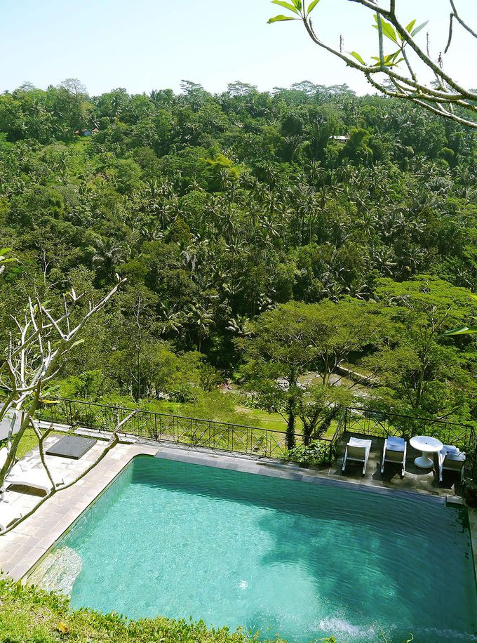 絶景スイートルームが5000円!広大なジャングルビュー「プリブンガリゾート&スパウブド」